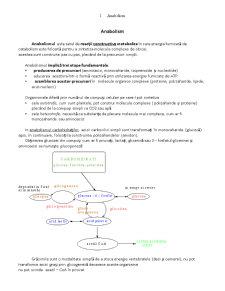 Lipide Enzime - Ciclul Krebs - Pagina 1