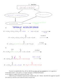 Lipide Enzime - Ciclul Krebs - Pagina 2