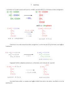 Lipide Enzime - Ciclul Krebs - Pagina 5