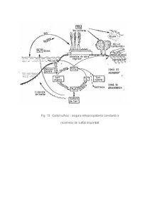 Fluxul de Energie - Informatie si de Substante in Ecosisteme - Pagina 3