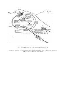 Fluxul de Energie - Informatie si de Substante in Ecosisteme - Pagina 4