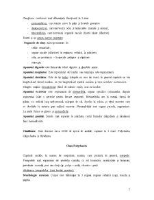 Nevertebrate - Pagina 2