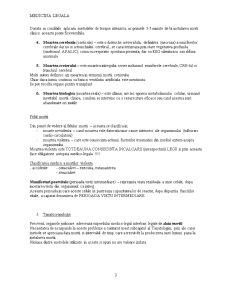 Medicina Legala - Pentru Juristi - Pagina 3