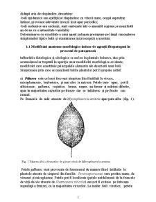Lucrari Practice Fitopatologie - Pagina 3