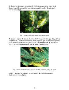 Lucrari Practice Fitopatologie - Pagina 4