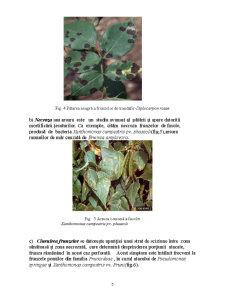 Lucrari Practice Fitopatologie - Pagina 5