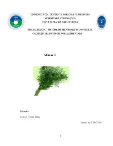 Mararul ca Planta Aromatica - Pagina 1