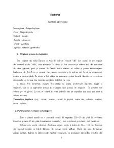Mararul ca Planta Aromatica - Pagina 3