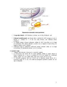 Organite Citoplasmatice - Pagina 5