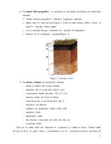 Componentele Statiunii Forestiere - Pagina 5