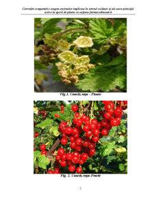 Biologia Speciei Ribes Rubrum - Coacaz Rosu - Pagina 2