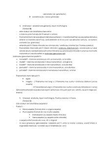 Tipuri de Inmultire - Pagina 3