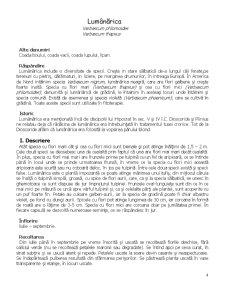 Plante Toxice și Medicinale - Pagina 4