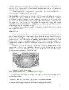Fermentarea Aluatului - Pagina 2