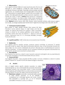 Celula, Unitatea Structurala si Genetica a Organismului - Pagina 4