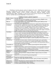 Clasificarea Speciilor Legumicole - Pagina 2