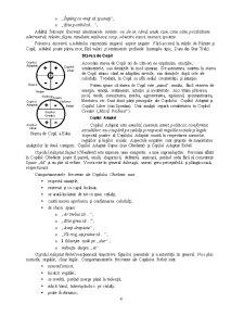 Analiză Tranzacțională - Pagina 4