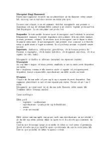 Mucegaiuri, Bacterii - Pagina 1