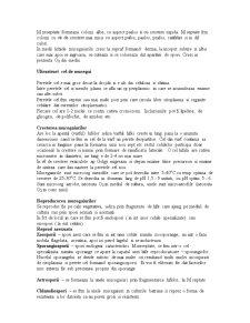 Mucegaiuri, Bacterii - Pagina 2