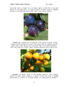 Impactul Congelarii in Strat Fluidizat si a Perioadei de Depozitare asupra Calitatii unor Fructe - Pagina 5