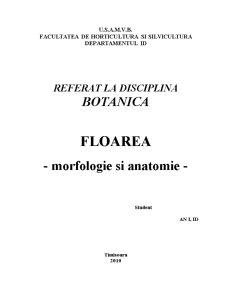 Floarea - Morfologie și Anatomie - Pagina 1