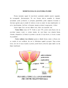 Floarea - Morfologie și Anatomie - Pagina 3