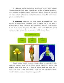 Floarea - Morfologie și Anatomie - Pagina 5