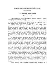 Fitotehnie - Plante Tuberculifere si Radacinoase - Pagina 1