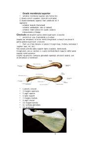 Oase si Articulatii si Sistemul Respirator - Pagina 3