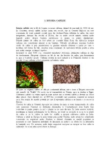 Cafeaua - Pagina 1