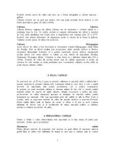 Cafeaua - Pagina 3