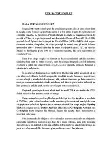 Pur Sânge Arab - Pagina 5