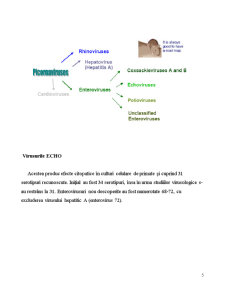 Tehnici de Biologie Moleculara in Analiza si Epidemiologia Enterovirusurilor - Pagina 5