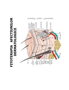 Fitoterapia in Afectiuni Cosmetice - Pagina 1