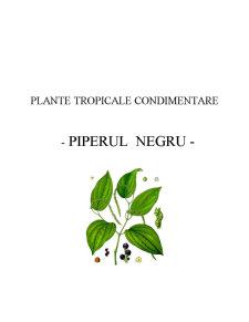 Plante Tropicale Condimentare - Piperul Negru - Pagina 2