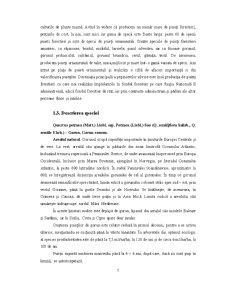 Tehnologii de Obținere a Plantelor de Gorun - Pagina 5
