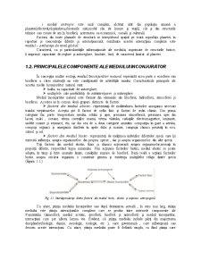 Mediul si Energia Regenerabila - Pagina 5