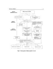 Managementul Dezastrelor - Secete - Pagina 5