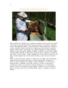 Lăptișorul de Matcă - Pagina 2