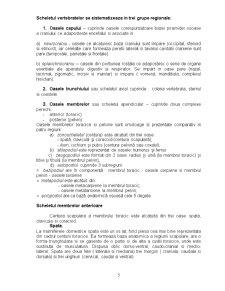 Anatomie - Osteologie, Artrologie și Miologie - Pagina 5