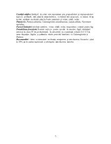 Subetajul Fag cu Rasinoase - Pagina 5