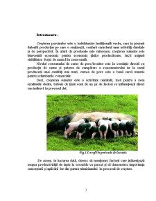 Influenta Diferitilor Factori asupra Productivitatii de Lapte la Scroafe - Pagina 3