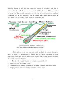 Tipuri de Par ale Scalpului din Regiunea Barladului - Pagina 4