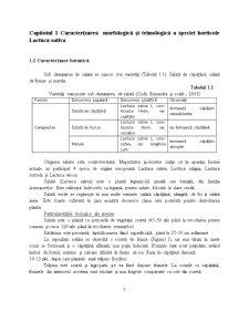 Caracterizarea Tehnologica, Standarde de Comercializare si Conditiile de Valorificare la Salata Verde (Lactuca Sativa L) - Pagina 2