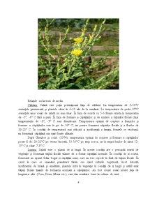 Caracterizarea Tehnologica, Standarde de Comercializare si Conditiile de Valorificare la Salata Verde (Lactuca Sativa L) - Pagina 4