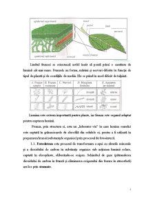Frunza - Pagina 5