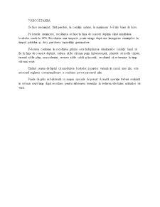 Grâul de Toamnă - Pagina 5