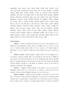 Schinduf - Pagina 3