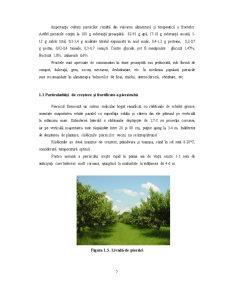 Comportarea Unor Soiuri Noi de Piersic in Conditiile Zonei din Bucuresti - Pagina 5