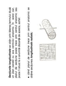 Anatomia Lemnului - Pagina 4